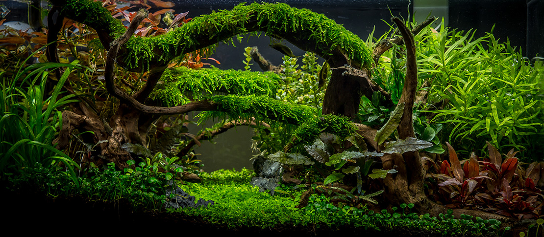Planted aquarium gallery green leaf aquariums for Planted tank fish